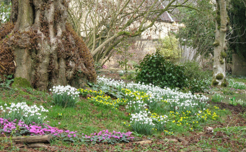 Colesbourne Park is blooming