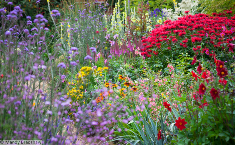 Review: 365 Days of Colour in Your Garden