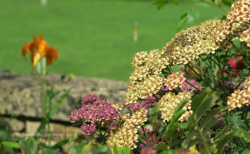 Chastleton House: gardening with the weeds