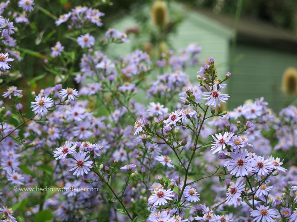 cheltenham open gardens