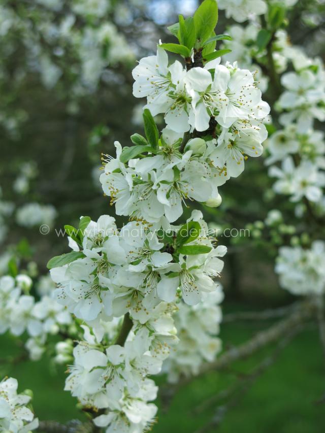 flower advent calendar