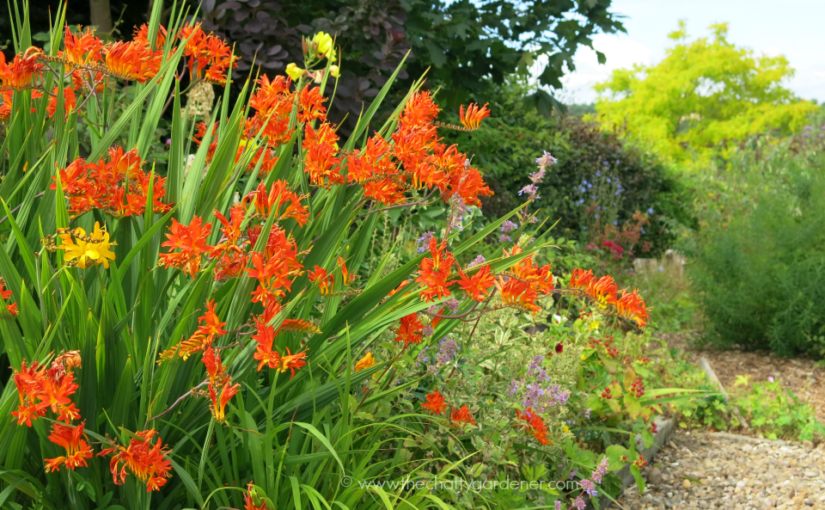 Harrell's – a hidden plant paradise