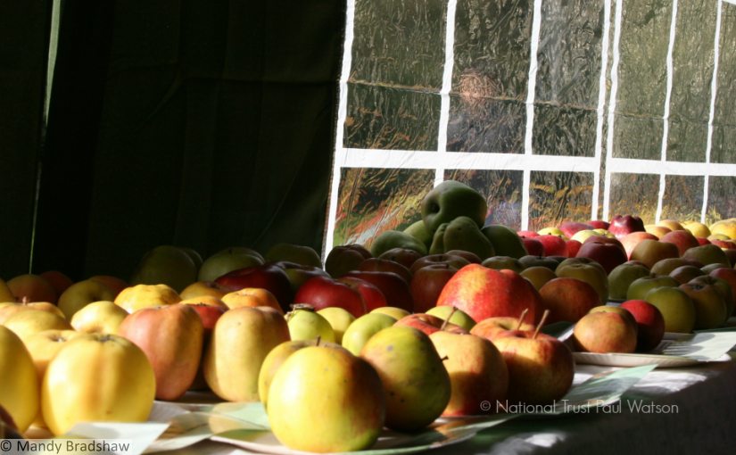 Apples galore at Snowshill