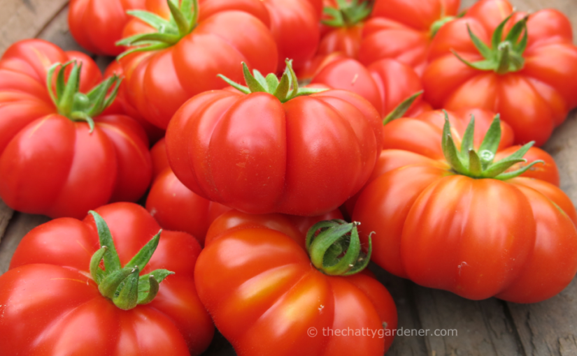 Tomatoes: tried and tasted