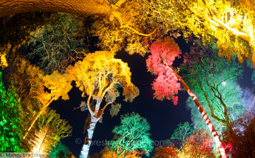 Westonbirt lights up